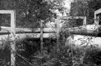 A view of UGA steam Pipes south of the steam plant in a wooded area just above physical plant